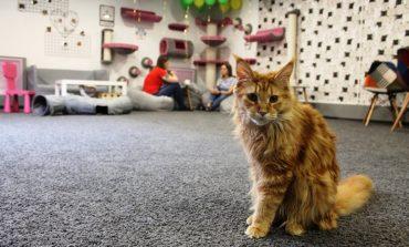 Кошкин дом или кафе: новое место для любителей мурчащих