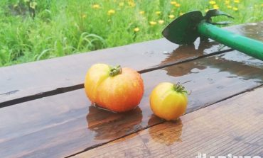 Готовьте зонты: погода на август в Хабаровске