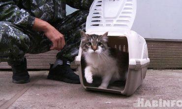 Зачем отлавливать и стерилизовать бездомных кошек в Хабаровске