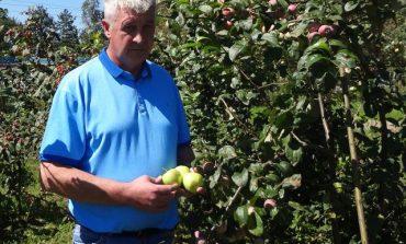 Беседа со специалистом о яблонях