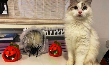 Мурчащий Хэллоуин устроили для детей в котокафе