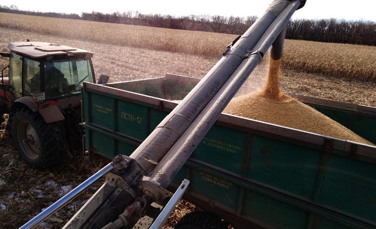Дела кукурузные: как обстоят дела с урожаем в Хабаровском крае