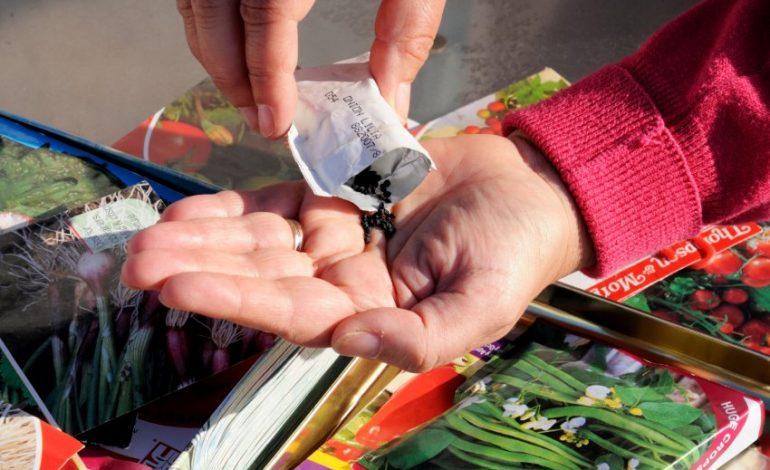 Советы при покупке семян