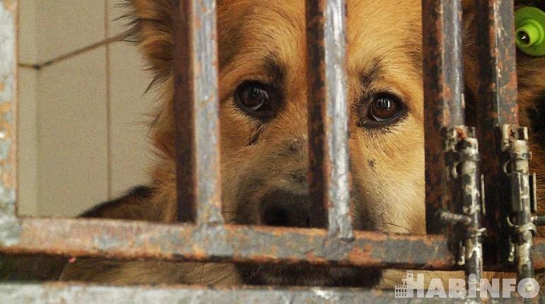 «Бродяги» за решёткой: в Хабаровске приютили безнадзорных животных