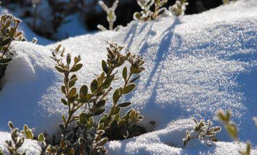 Холод пришёл, а снега нет: что делать?