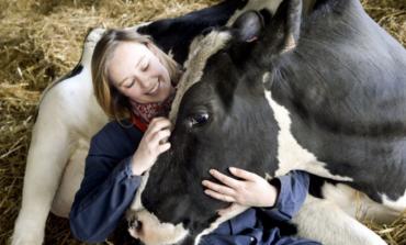 Люди и коровы радуются появлению высокоскоростного интернета в регионе