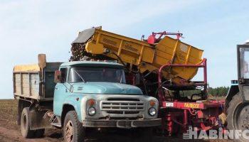 Краевые власти намерены увеличить производство картофеля в регионе