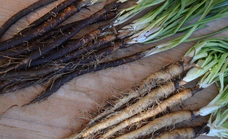 Скорционера – корень здоровья