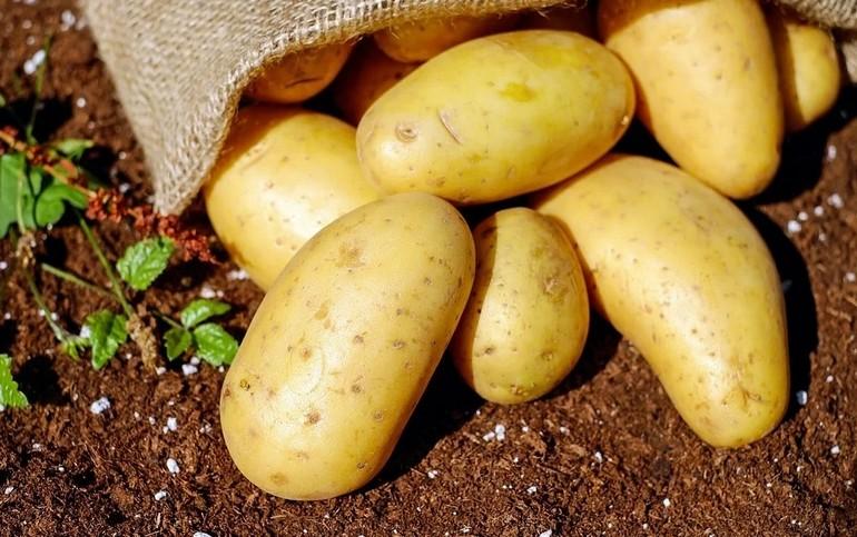 Новый дальневосточный сорт картофеля