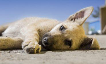 Мы в ответе за них: в крае заработала новая программа для бездомных животных