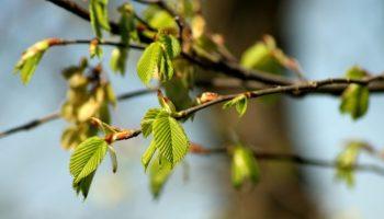 И на душе тепло! Погода на апрель в Хабаровске