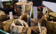 Этикетки для растений