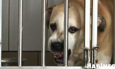 Агрессивных собак всё больше, а деньги на отлов безнадзорных животных заканчиваются