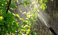 Краткий календарь по защите сада от вредителей