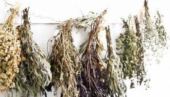 Как вырастить аптекарский огород на даче