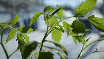 Советы дачников для хорошего урожая