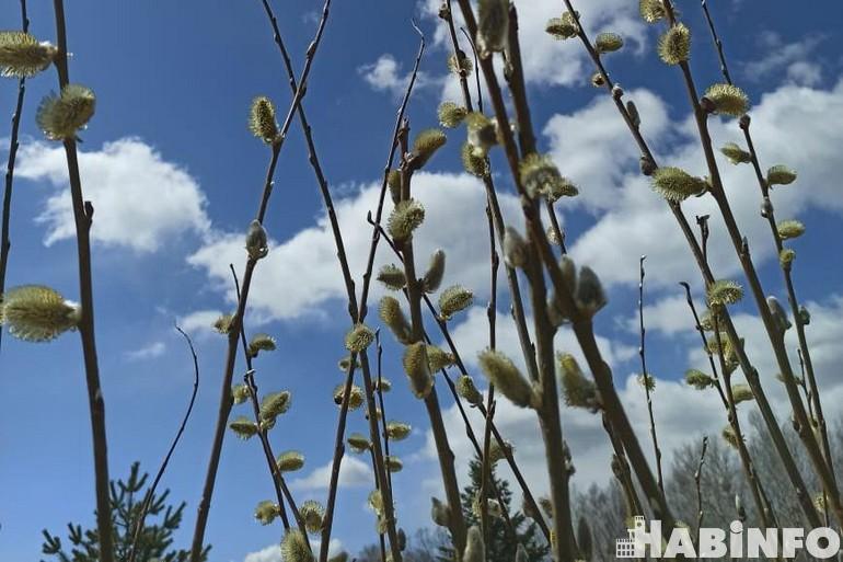 Неласковый май: какой будет погода в конце весны в Хабаровске