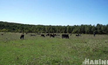 Дальневосточный гектар станет ближе к Хабаровску?