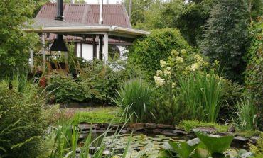 Елена Королёва: мой сад – моя зона комфорта