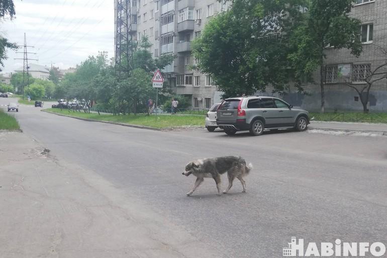 Депутаты готовы дать землю собачьим приютам без конкурса