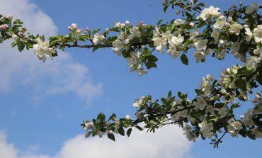 В саду - весенние заботы