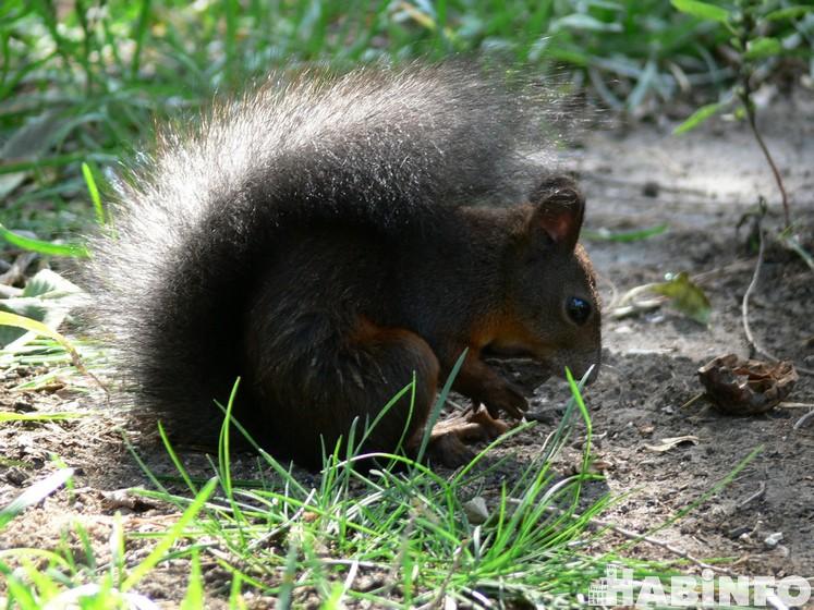 Хабаровские белки хотят твёрдых орешков