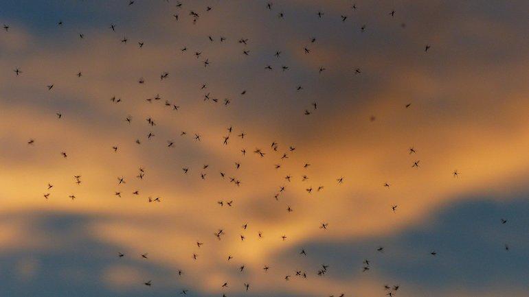 Эфирное масло от комаров