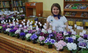Елена Хад: очень люблю эти нежные комнатные цветы - фиалки