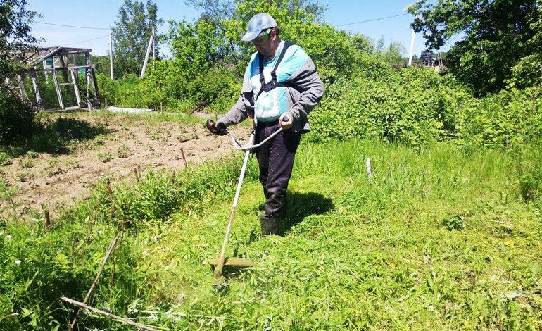 Трава по колено: как выбрать газонокосилку для дачи