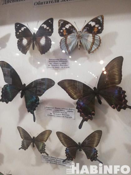 Мир бабочек хабаровчанина Владимира Дубатолова