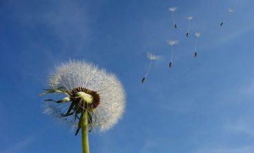 Влияние ветра на растения