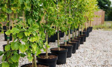 Качественный посадочный материал - основа хорошего урожая