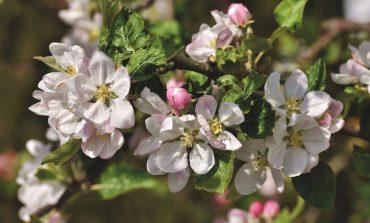 Восстановление дальневосточных садов
