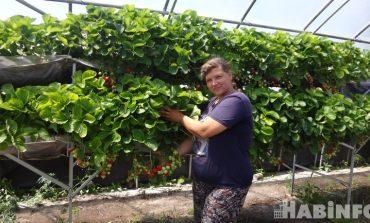 Клубнично-цветочный рай Светланы Скорик