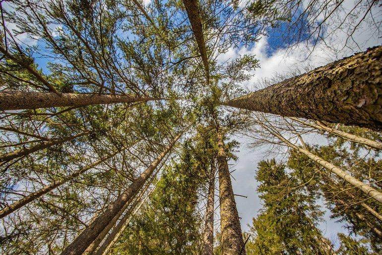 Лесные инновации: как обновляется отрасль в крае