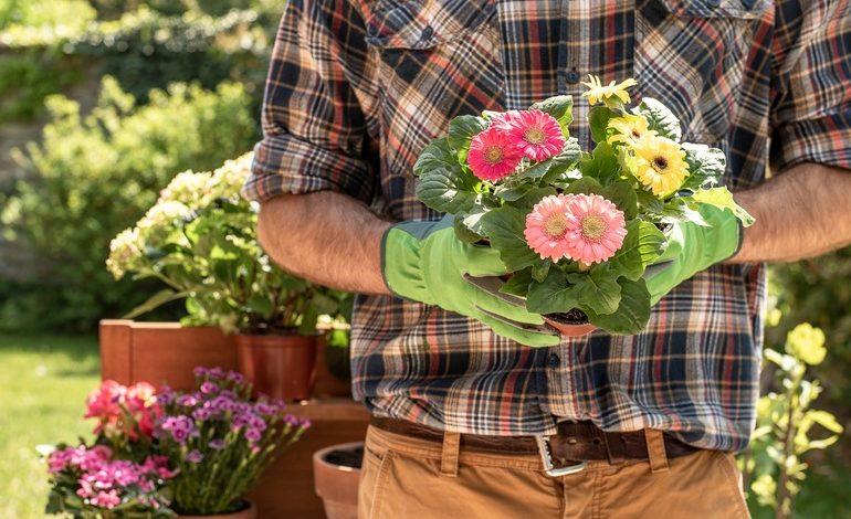 Август: посадка и пересадка цветов
