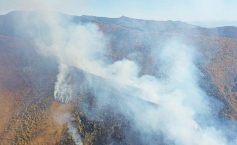 «Нужно просто говорить правду»: природный памятник у озера Амут пытаются спасти от пожара