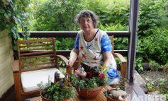Модный сад в доме - легко! Советы хабаровского ландшафтного дизайнера