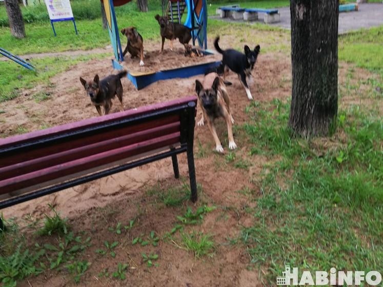 отлов собак хабаровск