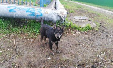 Лает, но не кусает: что делать с бродячими псами в Хабаровске?