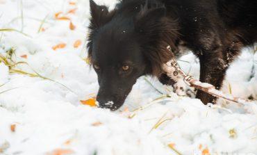 Зимой запахло: в Хабаровске выпал первый в 2021 году снег