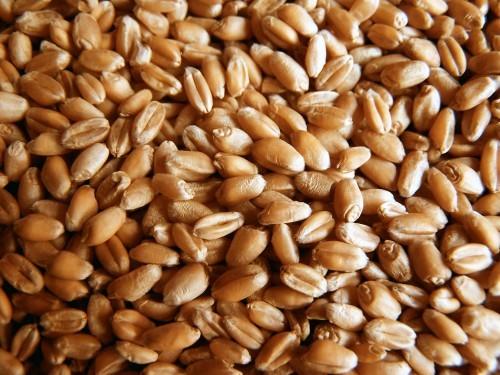 В Одессу хлынули зерно и турецкие бизнесмены