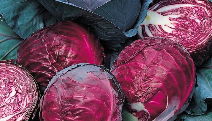 Розетка листьев у краснокочанной капусты небольшая, поэтому ей требуется меньше питания, чем белокочанной.