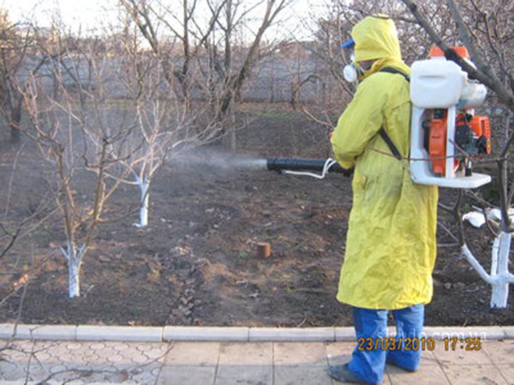Опрыскивание деревьев можно провести и 5% раствором мочевины (500г на 10 л воды) если не обрабатывали сад осенью.