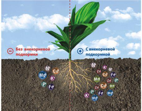 Существуют две системы питания растений, которые взаимосвязаны и неразделимы. Это питание через листья и через корни.