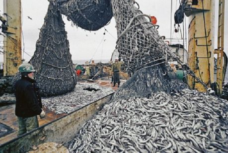 Рыбакам с Дальнего Востока выгоднее за валюту продавать свою продукцию на экспорт.