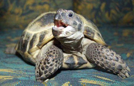 Может, стоит все-таки выбрать черепаху: и места мало занимает, и не гавкает, и не орет весной.