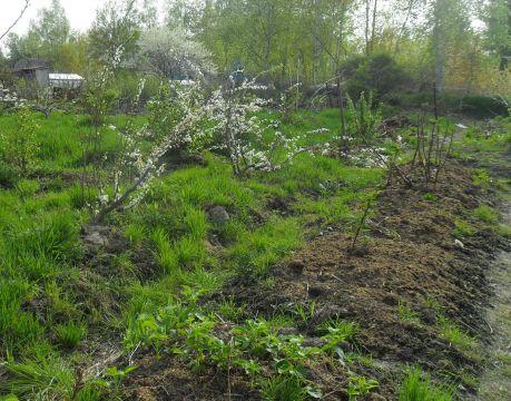Сад в болотистой местности СНТ «Чирки» нужно высаживать по грядовой технологии