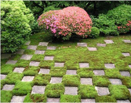 Мох красиво смотрится между камнями и плитами на садовых дорожках
