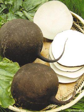 Основная питательная ценность редьки заключается в высоком содержании солей калия, натрия, кальция, магния, железа, фосфора, серы, хлора